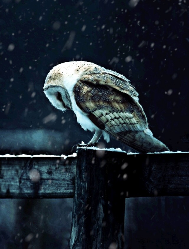 depresion, harry, hp, night, owl, potter, sadness, snow, winter