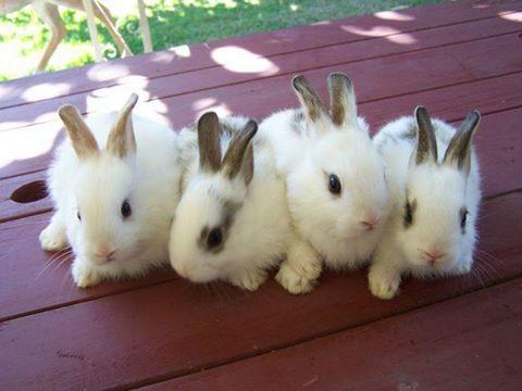 Pictures Of Cute Animals Really Cute Bunnies