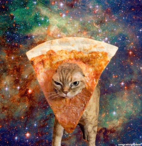 Cute Space Pizza Cats Wallpapers Cats Image 4178685