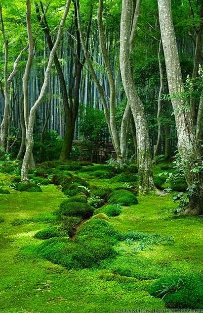 moss, path, mossy forest, forest, mossy path