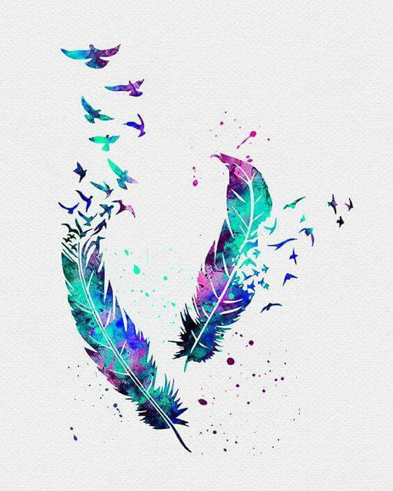 freedom, colors, feather, birds
