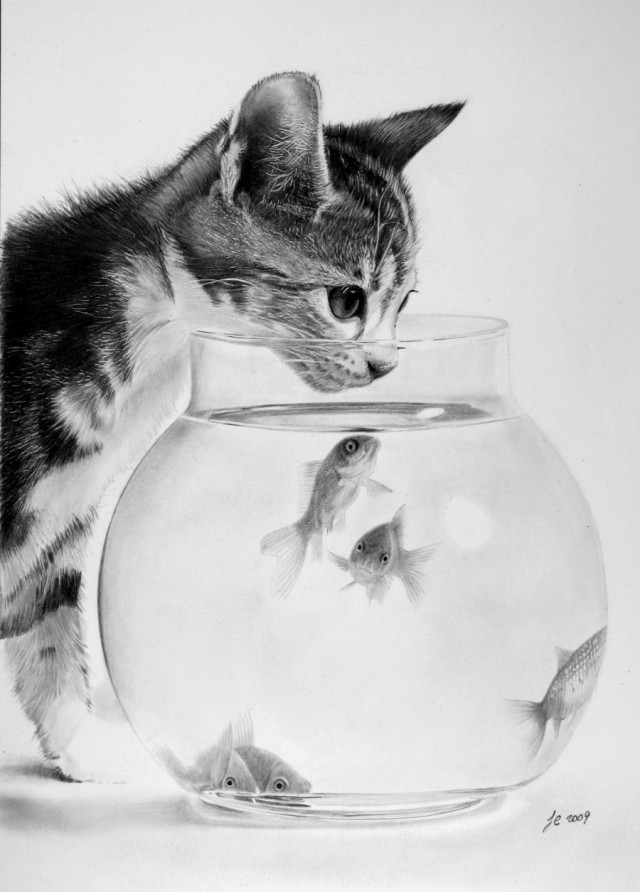 cat, chat, dessin, draw, drawing