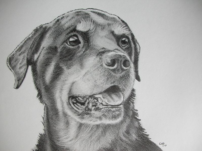 chien, dessin, dog, draw, drawing