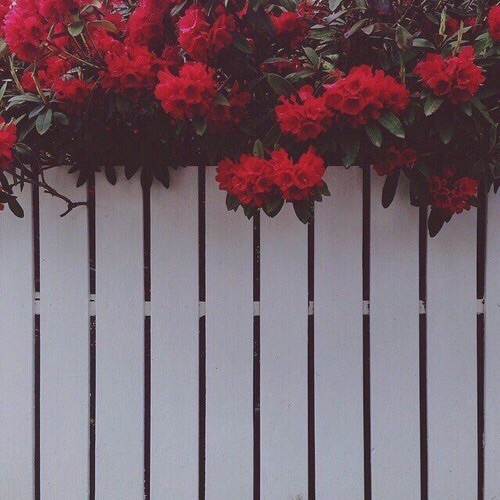 Background, Flowers, Grunge, Iphone Wallpaper, Love