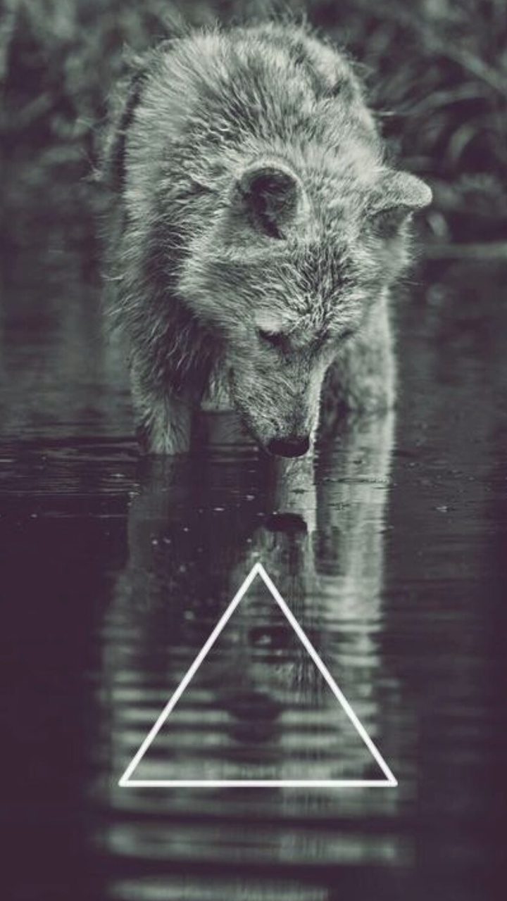 beautiful, mystic, wolves