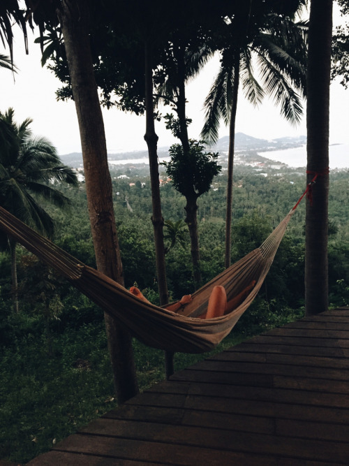 hammock, read, relax, rest, perfect view