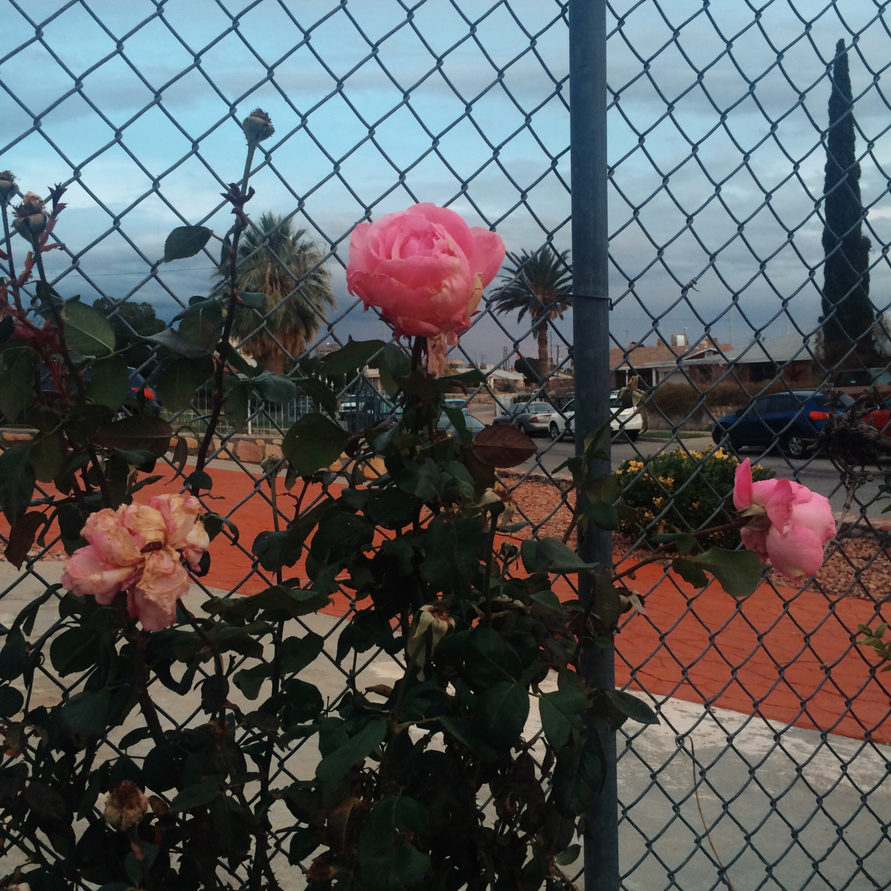 blue, cars, fence, flower, flowers