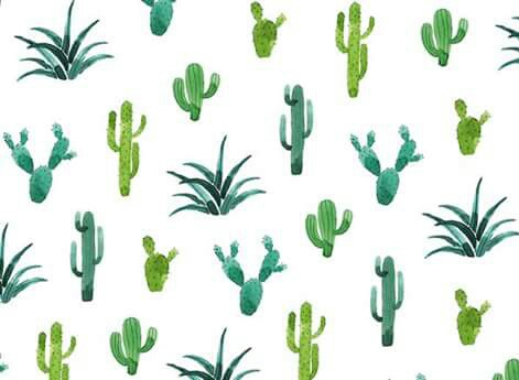 backgrounds, cactus, drawing, flore, green