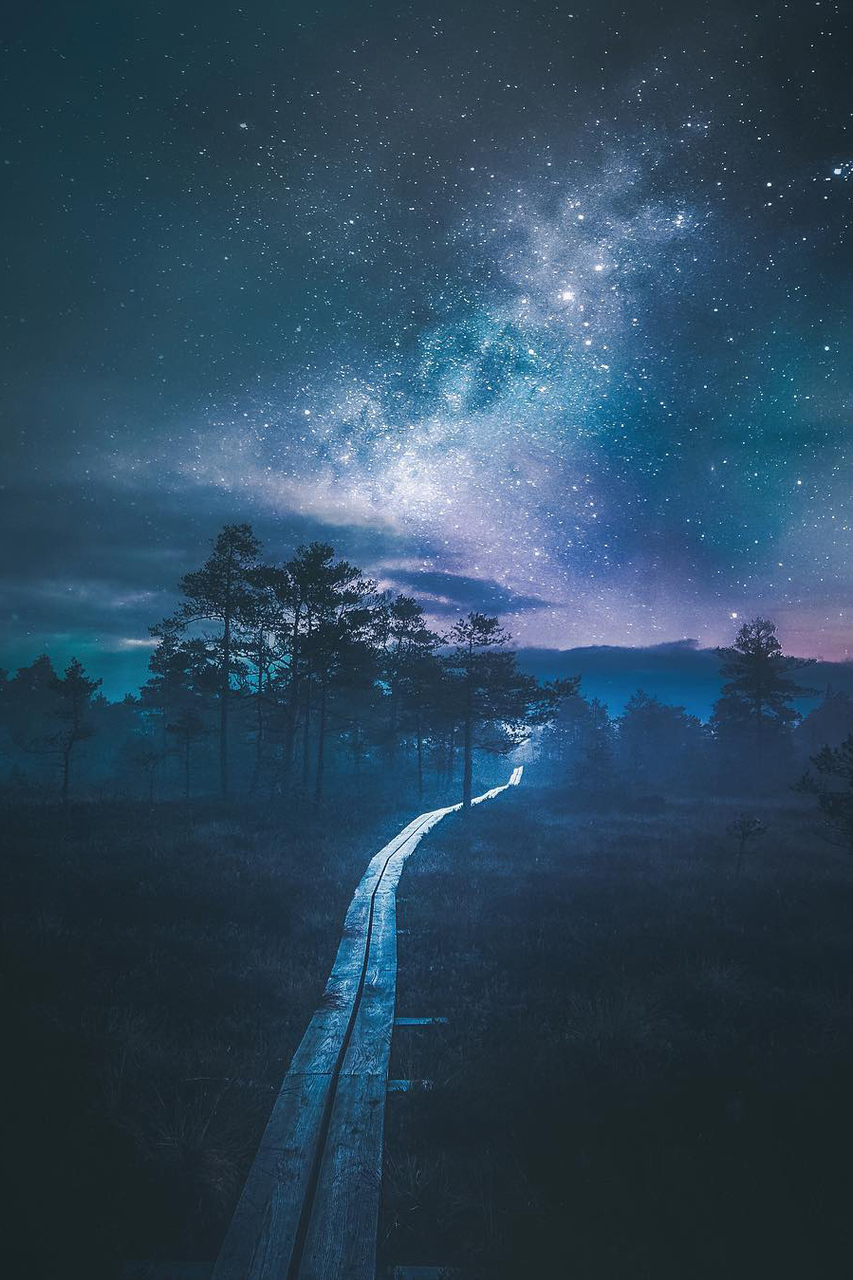 forest, nature, night, road, sky