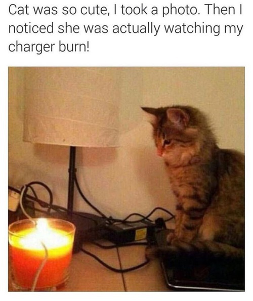 animal, best, burn, cat, charger