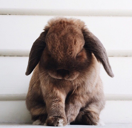 awesome, beautiful, brown, bunny, cool