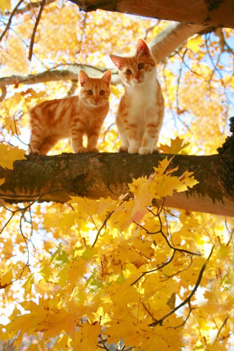 animal, autumn, beautiful, cat, cats