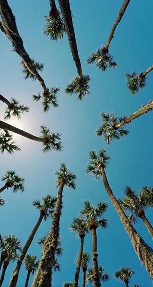 background, california, iphone, palm trees, samsung