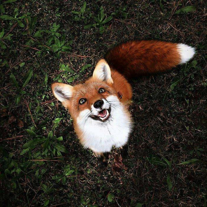 animal, fox, landscape, photography, scenery
