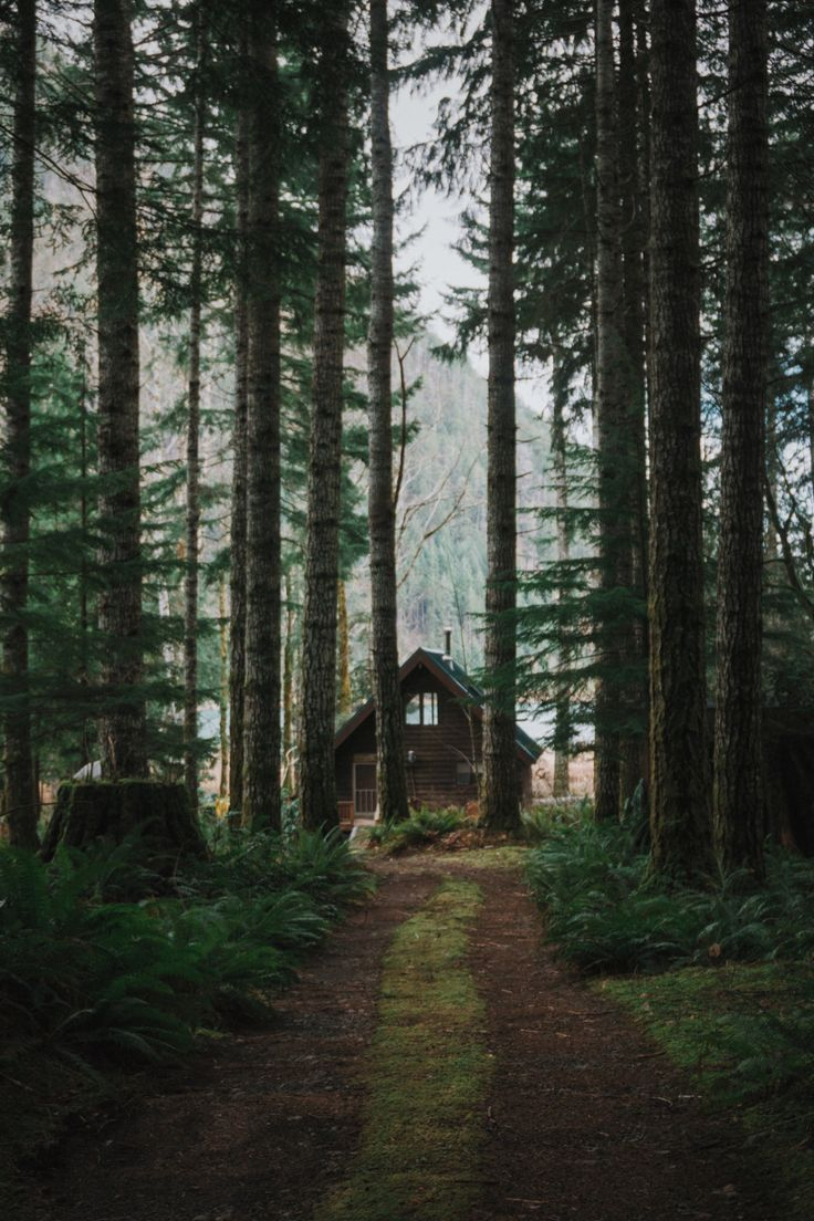 cottage, forest, garden, home, house