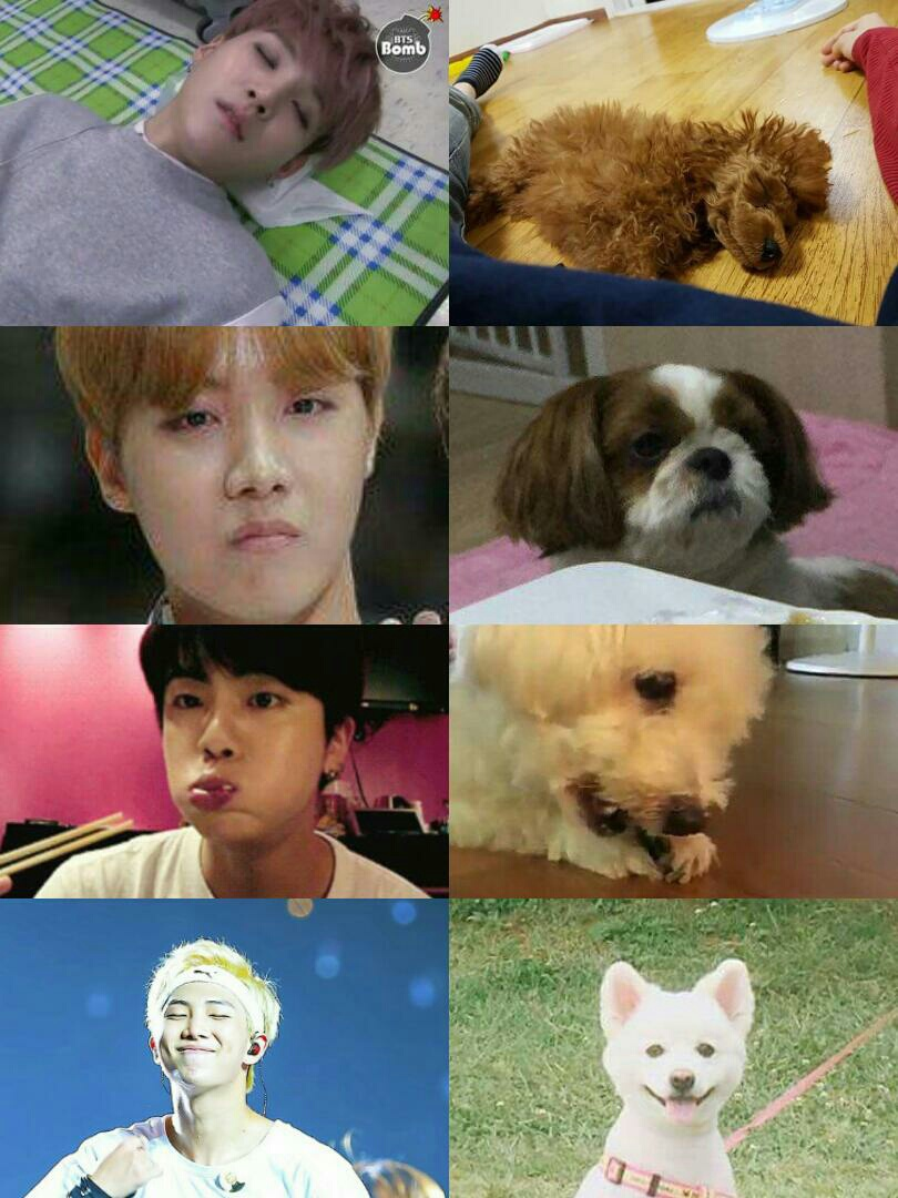 asian boys, bts, cute, dog, dogs
