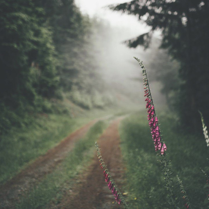 flowers, forest, nature, path, trees