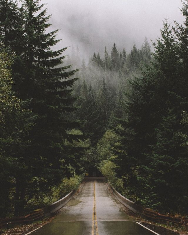 adventure, green, greenery, road, travel