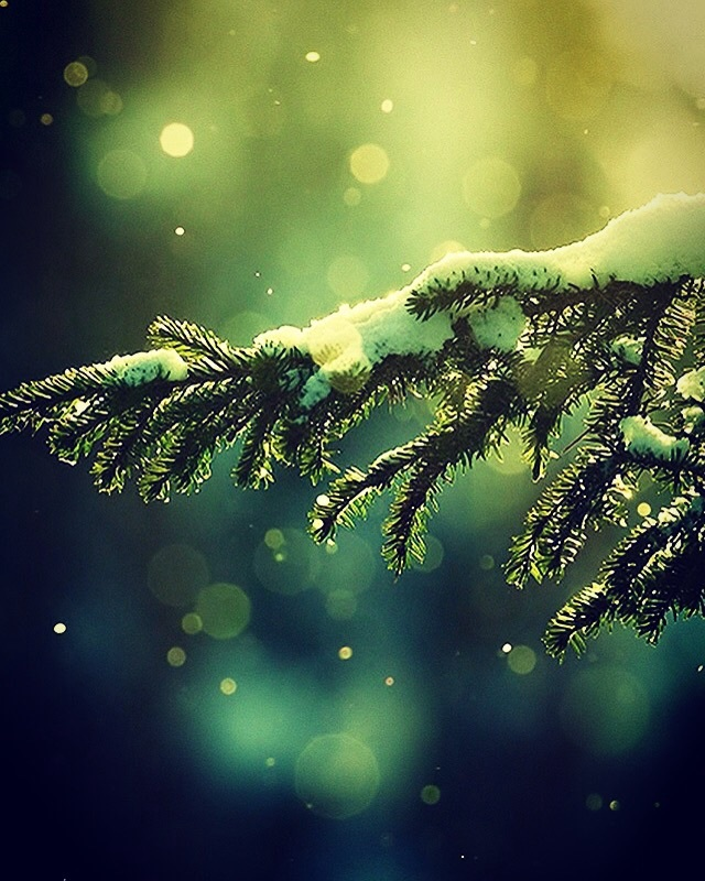 bokeh, christmas, cold weather, colorful, december