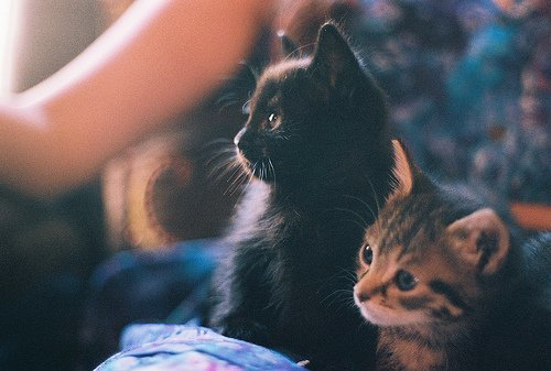 adorable, animals, cat, cute, kitten
