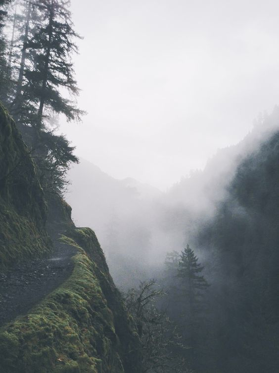 fog, forest, hiking, mountains, nature