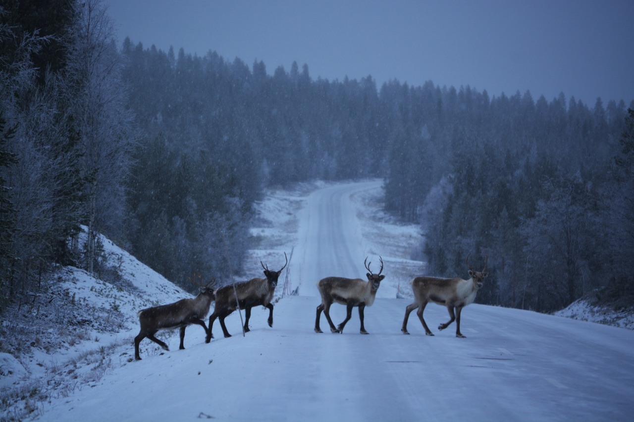 animals, deer, forest, free, horns