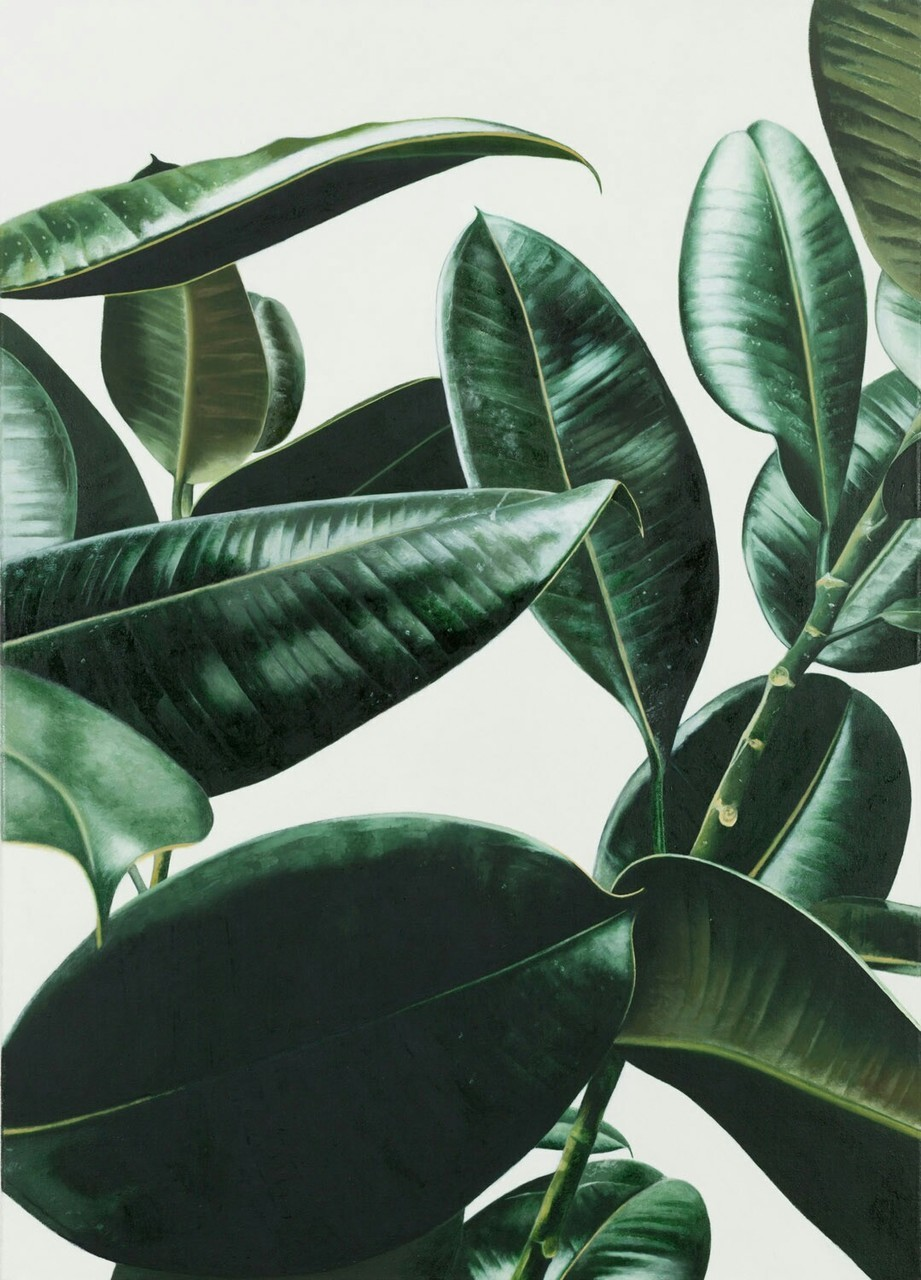 exotic, green, leaf, palms, tropical