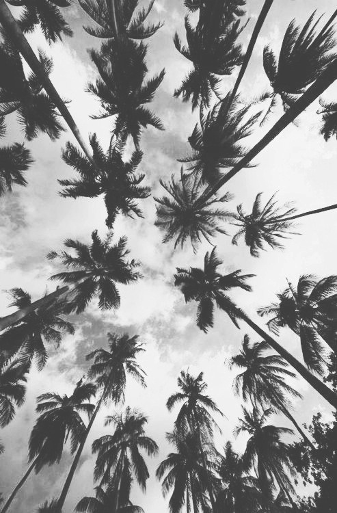 background, black and white, darkness, nature, palm