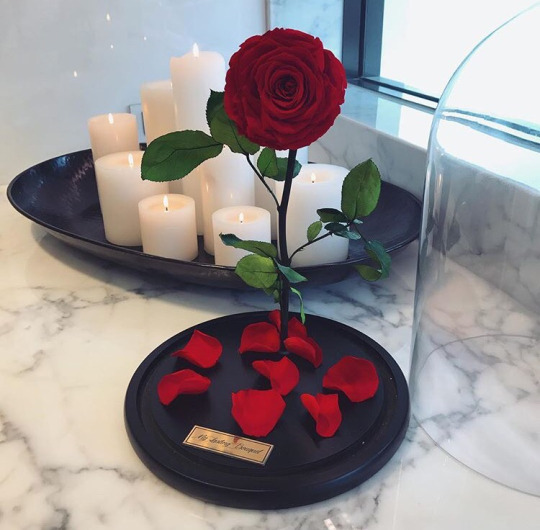 beauty, beauty and the beast, movie, red, roses