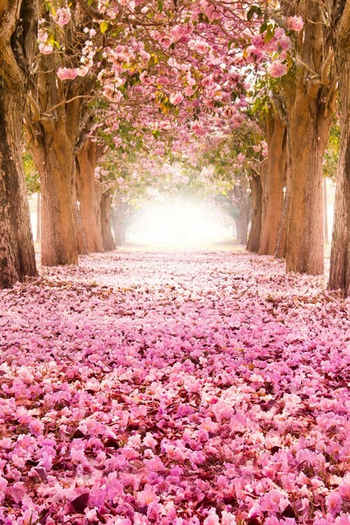 bosque, flores, flowers, forest, pink