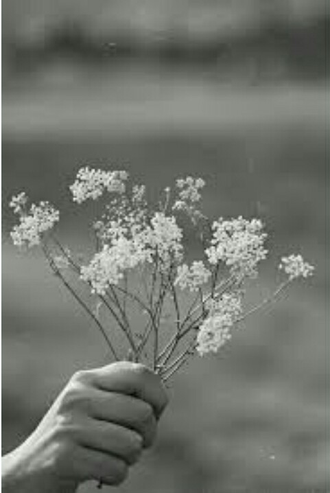 Blanco Y Negro Flores Tumblr Image 5128045 By Helena888 On