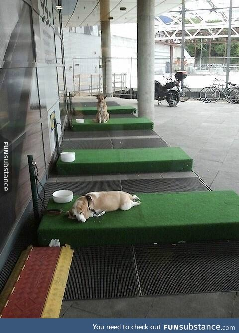 dogs, germany, have, ikea, lot