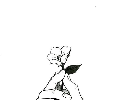 aesthetic, background, black, black and white, flower