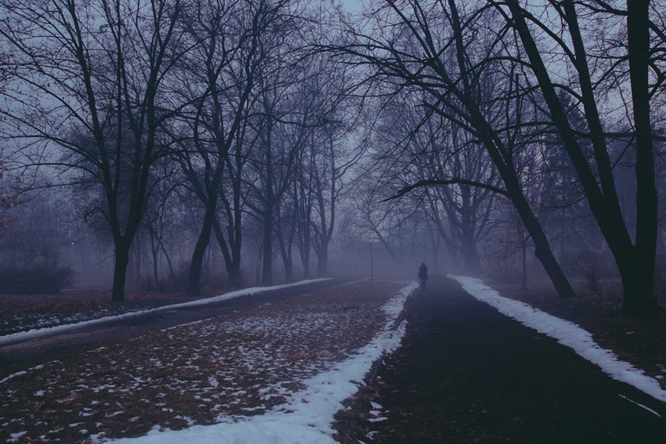 dark, forest, lonely, park, snow