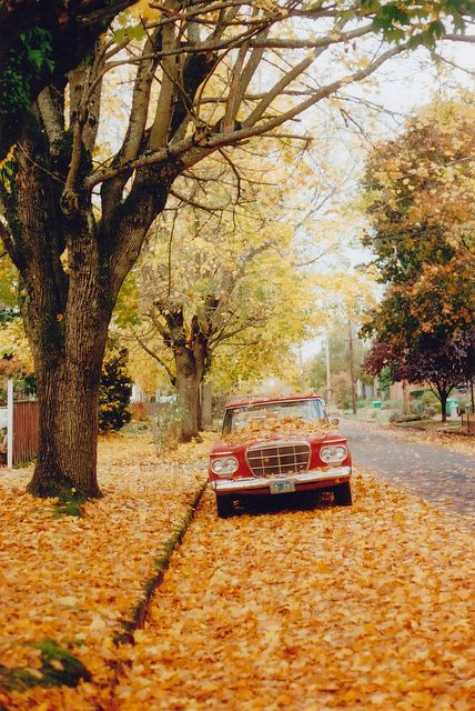 autumn, car, leaves, orange, trees