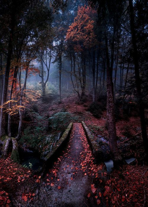 beautiful, fairy tale, forest, national park, nature