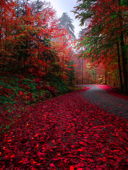 autumn, colors, fall, fall colors, fallen leaves