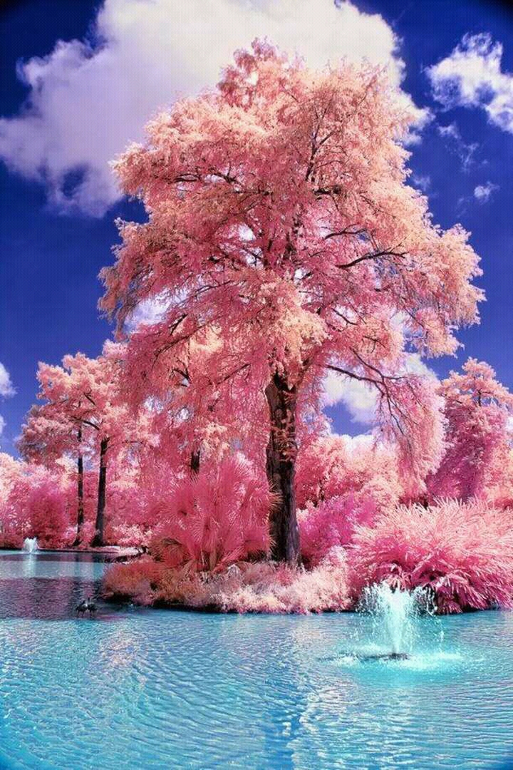 forest, pink, river, woods