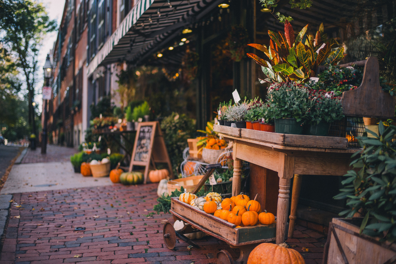 autumn, cozy, fall, harvest, pumpkin
